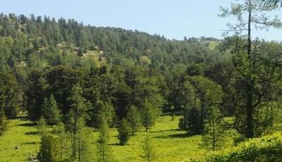 Монгол Улс НҮБ-ын Уур амьсгалын өөрчлөлтийн суурь конвенцэд ойн хүлэмжийн хийн ялгарлын суурь түвшнийг хүргүүлсэн анхны тайгын ой бүхий улс боллоо.